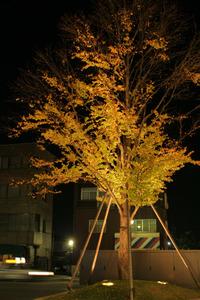 20071106img_0750